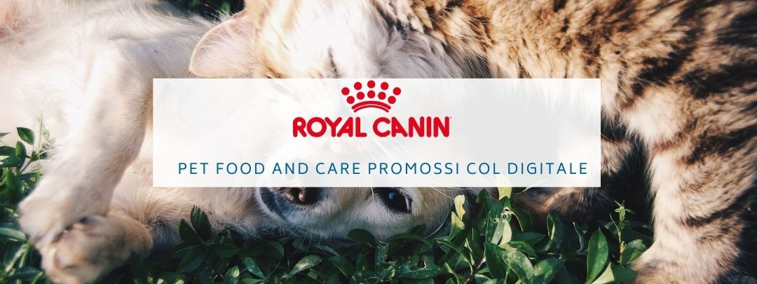 Royal Canin food and care