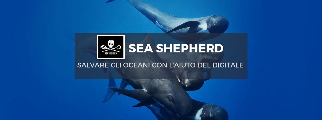 Sea Shepherd - strategie digitali